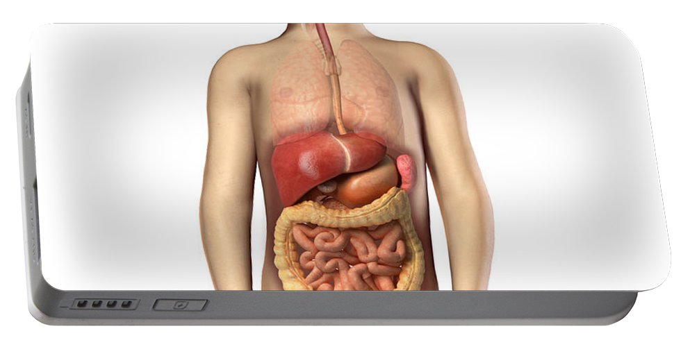 Anatomy Portable Battery Charger featuring the digital art Anatomy Of A Childs Full Digestive by Leonello Calvetti