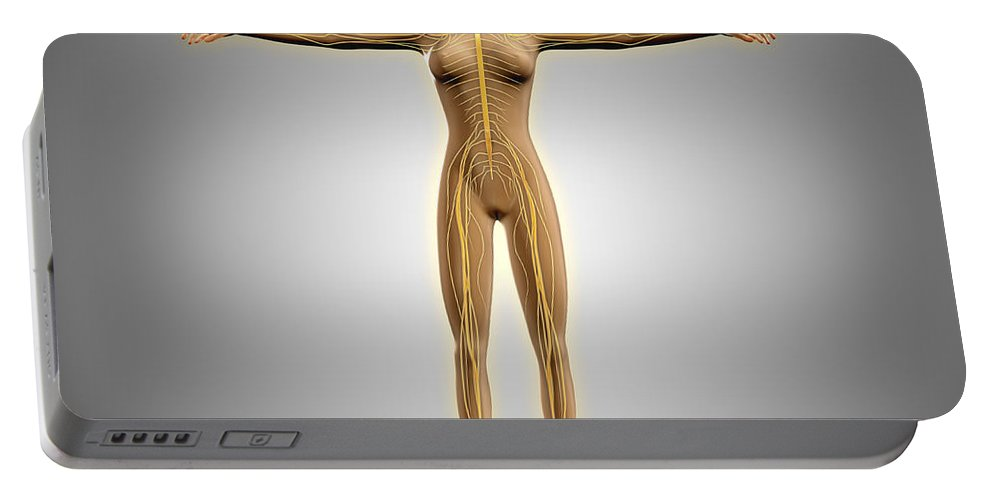 Gray Background Portable Battery Charger featuring the digital art Anatomy Of Female Body With Nervous by Stocktrek Images