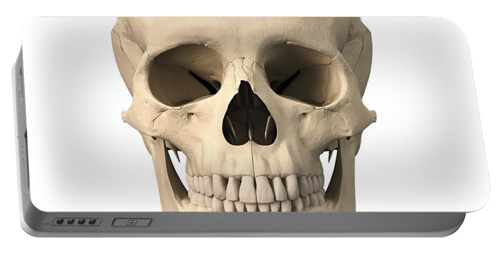 Anatomy Portable Battery Charger featuring the digital art Anatomy Of Human Skull, Cutaway View by Leonello Calvetti