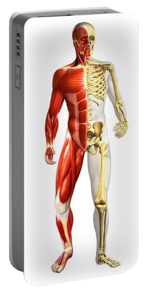 Three Dimensional Portable Battery Charger featuring the digital art Anatomy Of Male Body With Half Skeleton by Leonello Calvetti