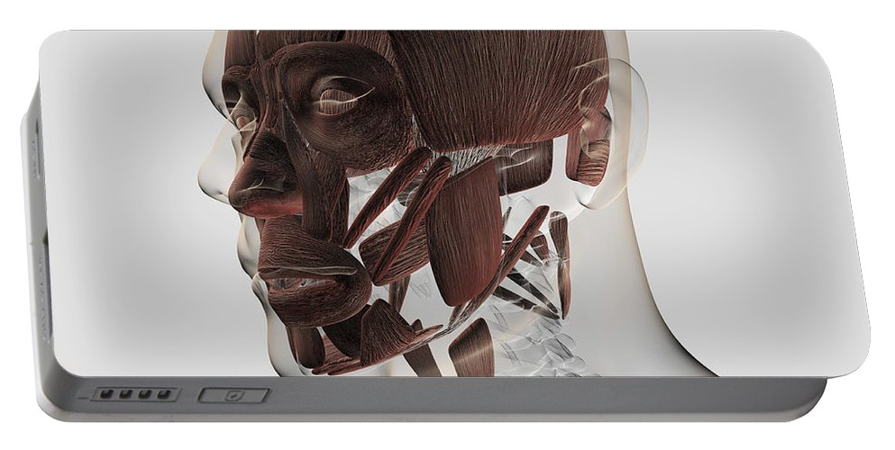 Square Image Portable Battery Charger featuring the digital art Anatomy Of Male Facial Muscles, Side by Stocktrek Images