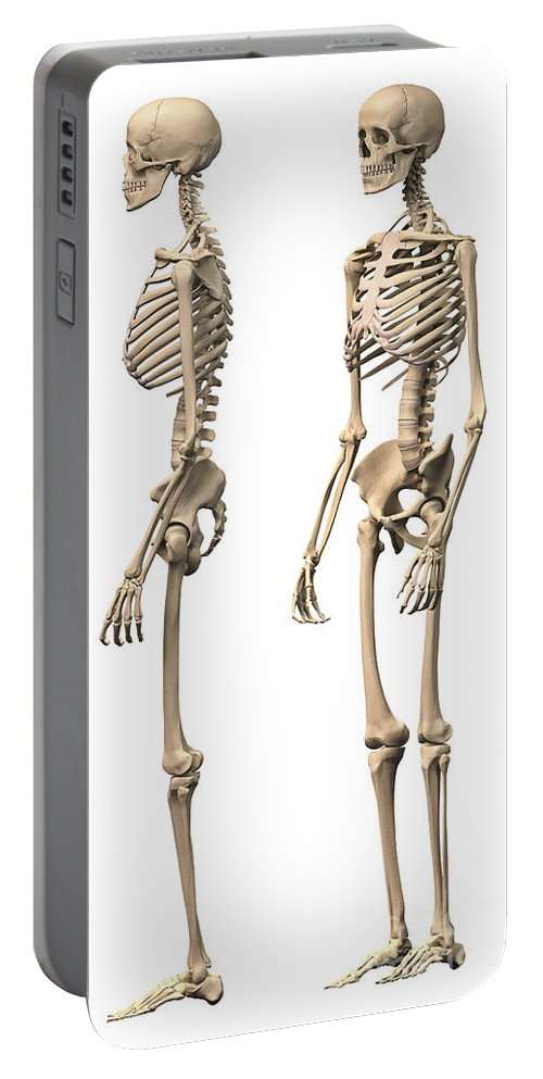 Three Dimensional Portable Battery Charger featuring the digital art Anatomy Of Male Human Skeleton, Side by Leonello Calvetti