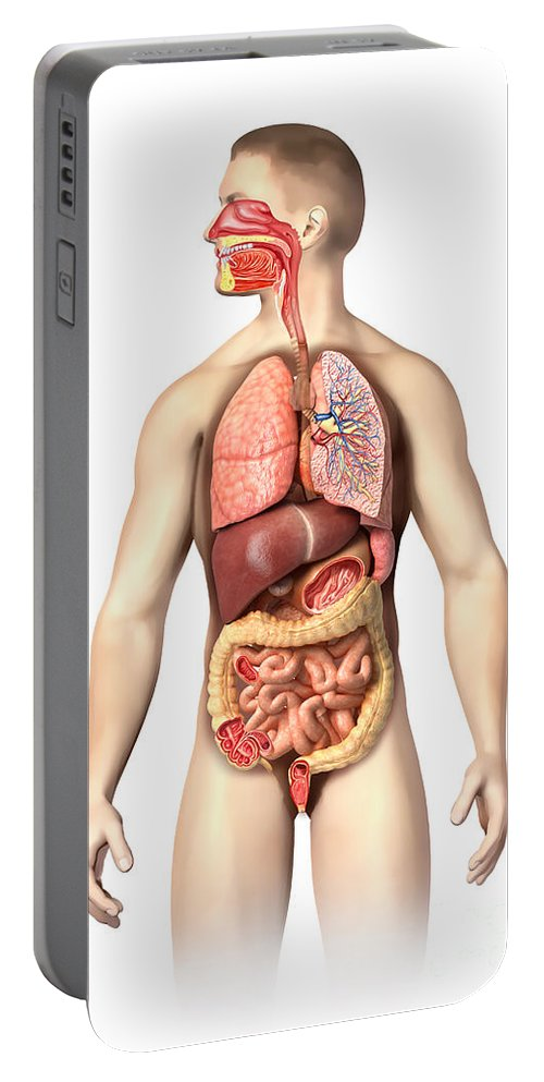 Three Dimensional Portable Battery Charger featuring the digital art Anatomy Of Male Respiratory by Leonello Calvetti