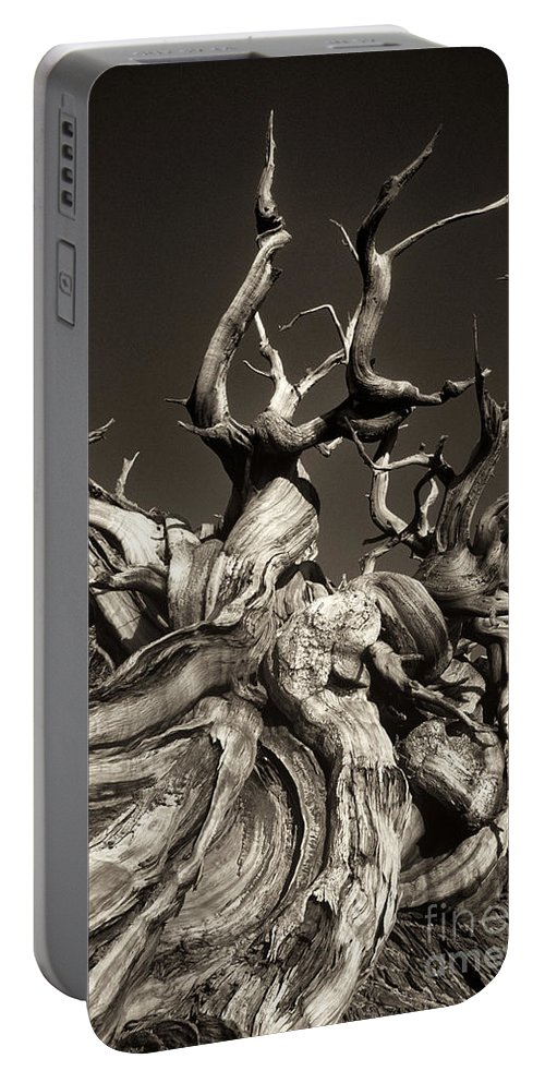 American Portable Battery Charger featuring the photograph Ancient Bristlecone Pine In Black And White by Dave Welling