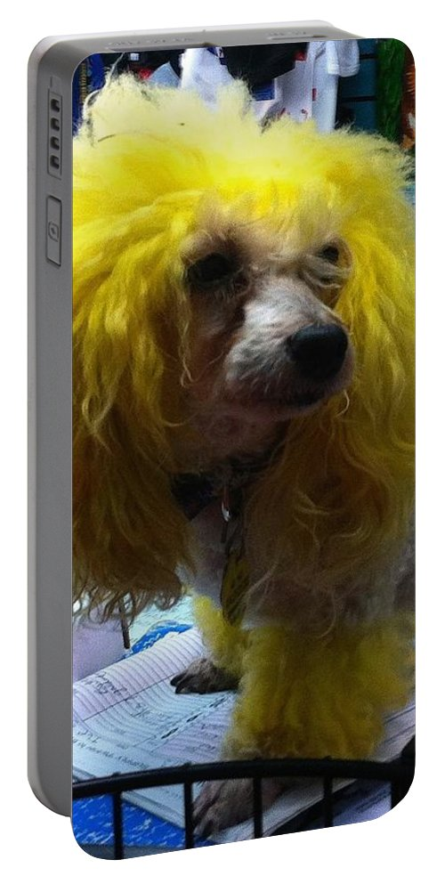 Dog Poodle Mans Best Friend New Orleans Crescent City Pet French Quarter Dog Adorable Blonde Dog White Dog Small Dog Portable Battery Charger featuring the photograph Andrew The Poodle by Saundra Myles