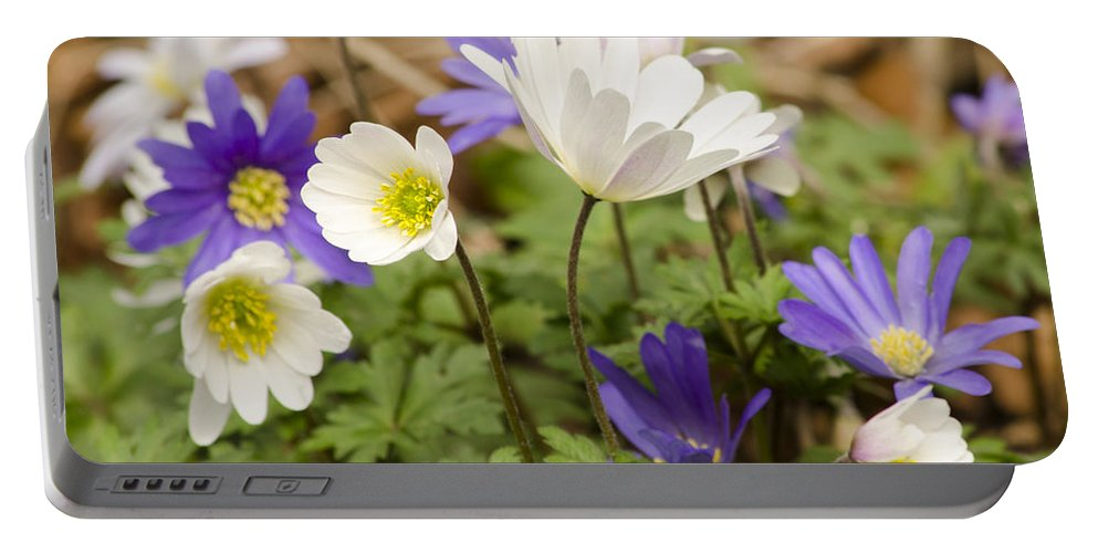Flower Portable Battery Charger featuring the photograph Anemone Blanda by Spikey Mouse Photography