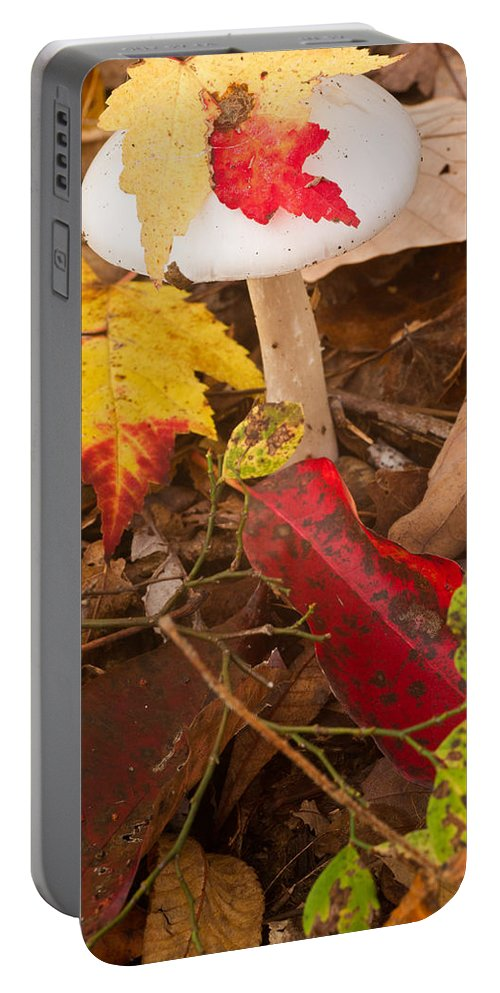 Fungi Portable Battery Charger featuring the photograph Angel White Mushroom 2 by Douglas Barnett