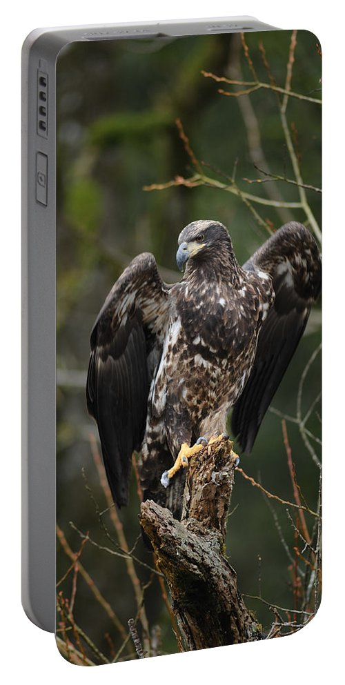 Bald Eagle Portable Battery Charger featuring the photograph Angle's Wings by Randy Giesbrecht
