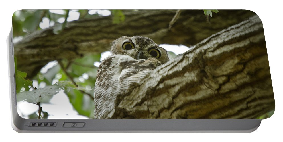 Great Horned Owl Portable Battery Charger featuring the photograph Angry Bird by Saija Lehtonen