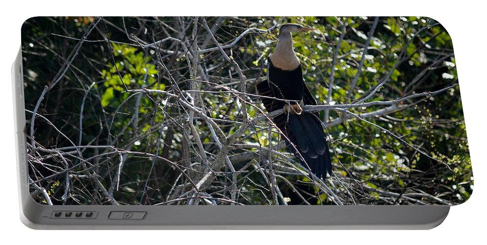 Florida Portable Battery Charger featuring the photograph Anhinga In Brush by Linda Kerkau