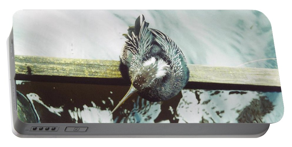 Lakes Park In Ft.myers Portable Battery Charger featuring the photograph Anhinga Or Snakebird by Robert Floyd
