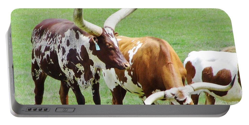 Ankole Portable Battery Charger featuring the photograph Ankole And Texas Longhorn Cattle by D Hackett