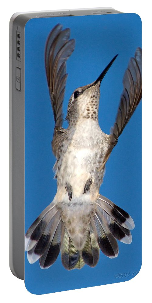 Animal Portable Battery Charger featuring the photograph Anna's Hummingbird Tail Display by Ron D Johnson