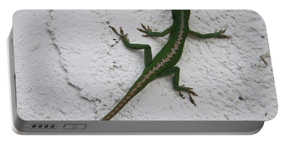 Lizard Portable Battery Charger featuring the photograph Anole On Stucco by Mary Deal