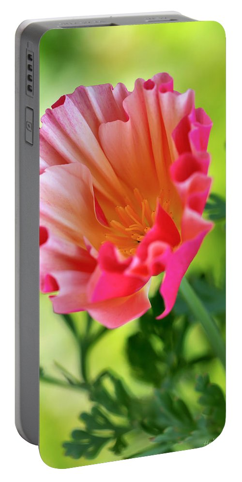 Annual Portable Battery Charger featuring the photograph Another Glimpse by Heidi Smith