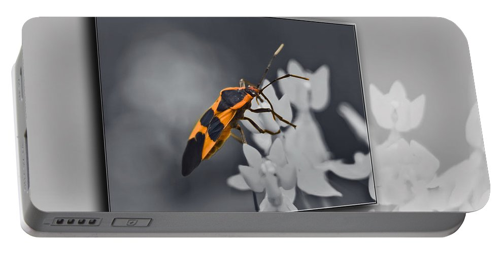 Milkweed Bug Portable Battery Charger featuring the photograph Another World by Carolyn Marshall