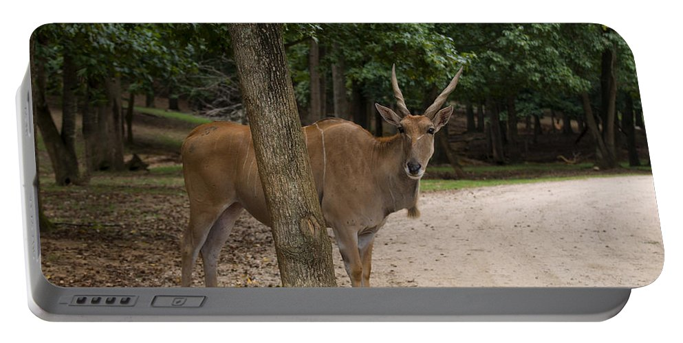 Antelope Portable Battery Charger featuring the digital art Antelope Behind A Tree by Chris Flees