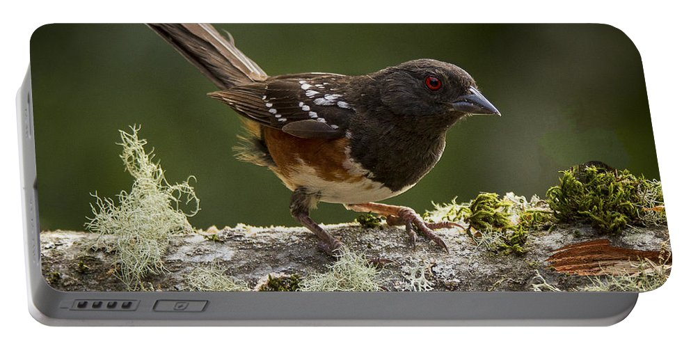 Bird Portable Battery Charger featuring the photograph Anticipation by Jean Noren