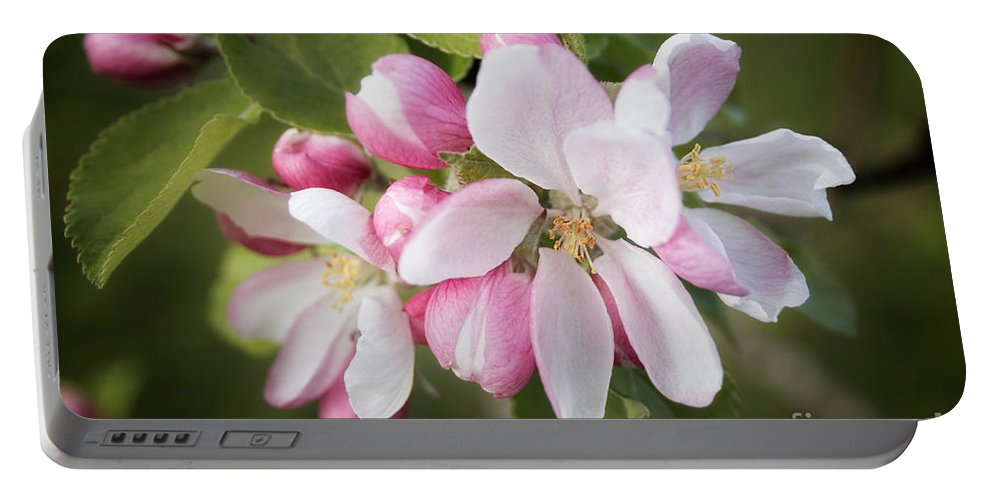 Apple Blossom Portable Battery Charger featuring the photograph Apple Blossom by Ann Garrett