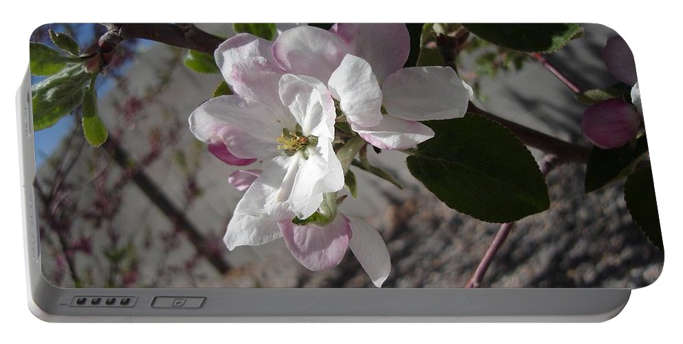 Flowers Portable Battery Charger featuring the photograph Apple Blossoms 3 by Lovina Wright
