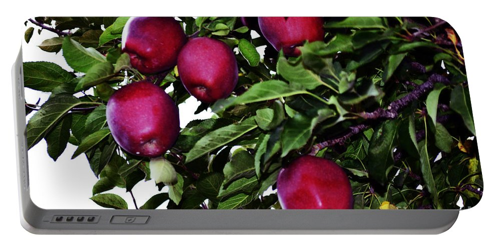 Apple Portable Battery Charger featuring the photograph Apple Picking Time by Kevin Fortier