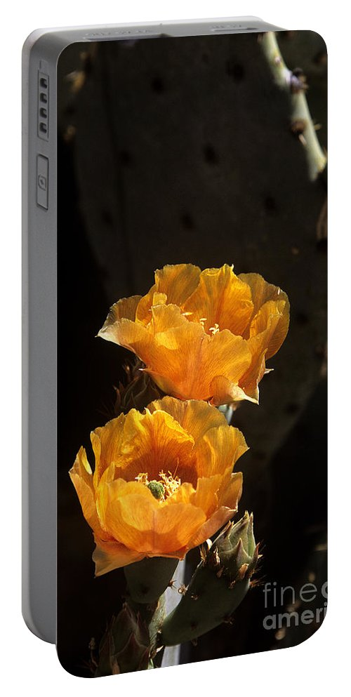 Cactus Portable Battery Charger featuring the photograph Apricot Blossoms by Kathy McClure