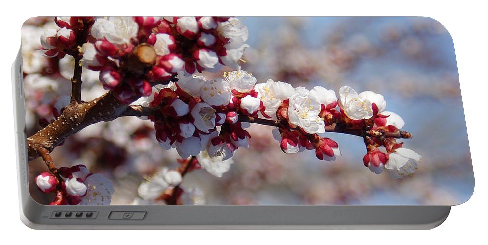 Spring Portable Battery Charger featuring the photograph Apricot Blossoms Popping by Mike and Sharon Mathews