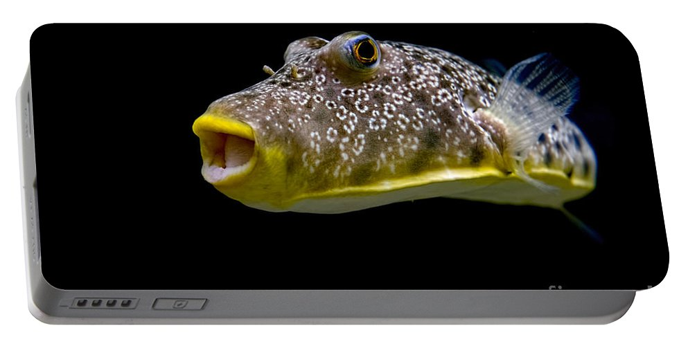 Fish Portable Battery Charger featuring the photograph Aquarium Fish by David Arment