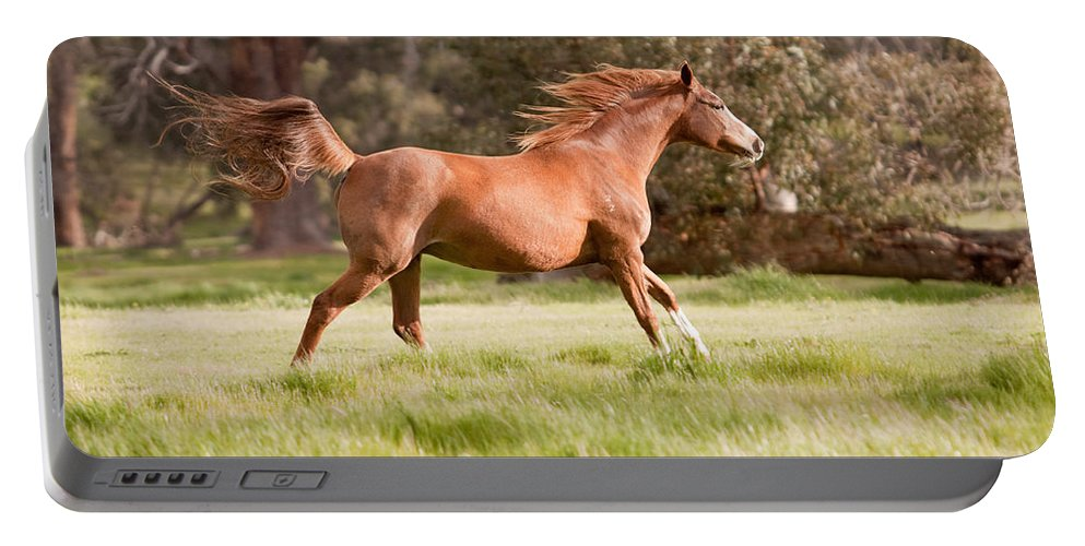Arabian Horse Print Portable Battery Charger featuring the photograph Arabian Horse Running Free by Michelle Wrighton