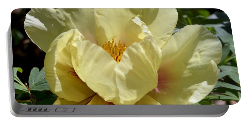Peony Portable Battery Charger featuring the photograph Arcadia 9469 by Terri Winkler