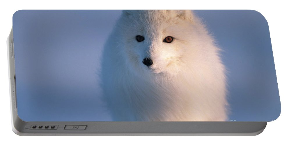 00342972 Portable Battery Charger featuring the photograph Arctic Fox, Alaska by Yva Momatiuk and John Eastcott