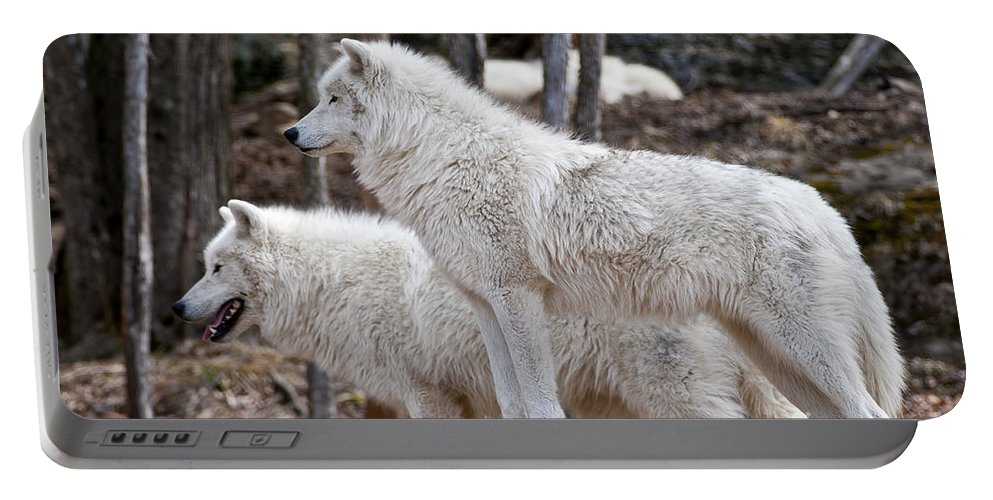 Arctic Wolf Photography Portable Battery Charger featuring the photograph Arctic Wolf Pair by Wolves Only