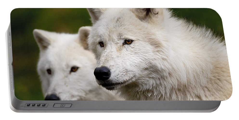 Arctic Wolf Portable Battery Charger featuring the photograph Arctic Wolf Picture 247 by World Wildlife Photography