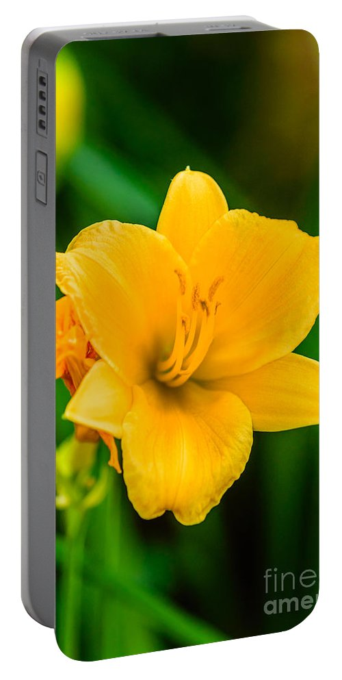 Leaves Portable Battery Charger featuring the photograph Stella De Oro Lilly by Elvis Vaughn