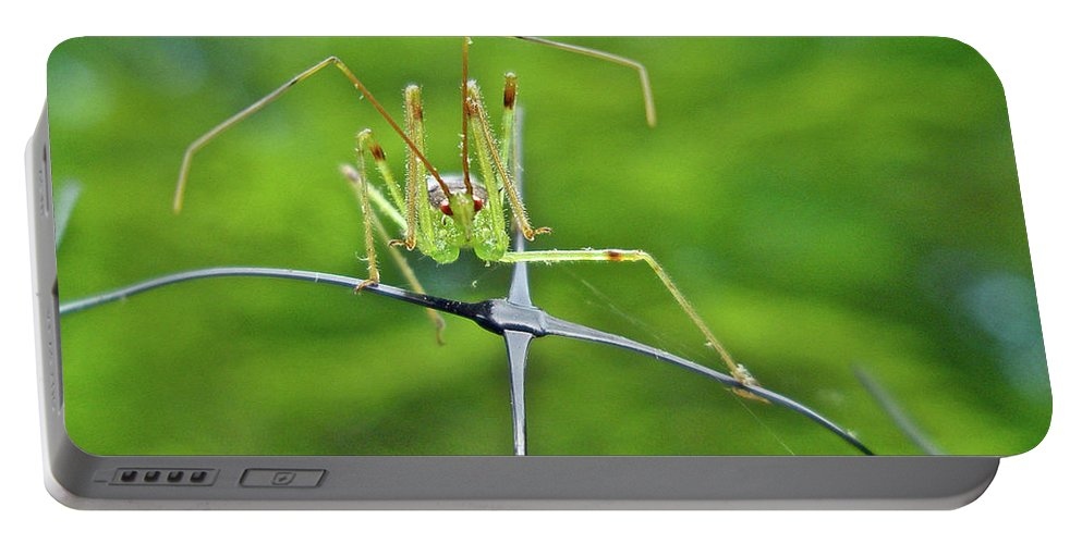 Assassin Portable Battery Charger featuring the photograph Assassin Bug Nymph - Reduviidae by Mother Nature