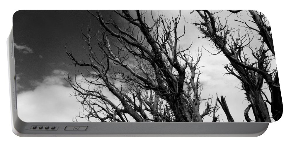 Pine Portable Battery Charger featuring the photograph At The End Of Time by Joe Kozlowski