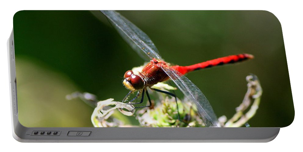 Dragonfly Portable Battery Charger featuring the photograph August Dragonfly by Neal Eslinger