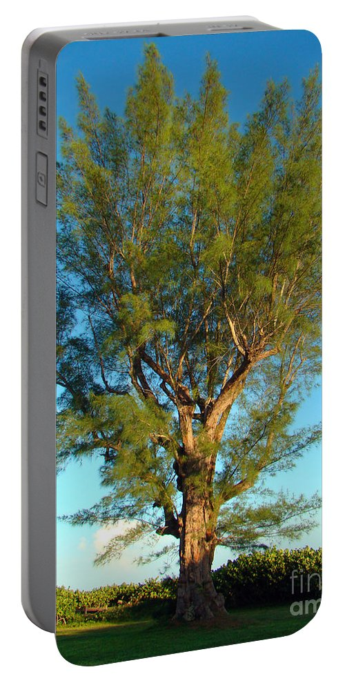 Australian Pine Portable Battery Charger featuring the photograph Australian Pine At Sundown by Nancy L Marshall