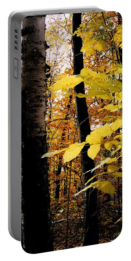 Green Portable Battery Charger featuring the photograph Autumn Birch Trees by Michelle Calkins