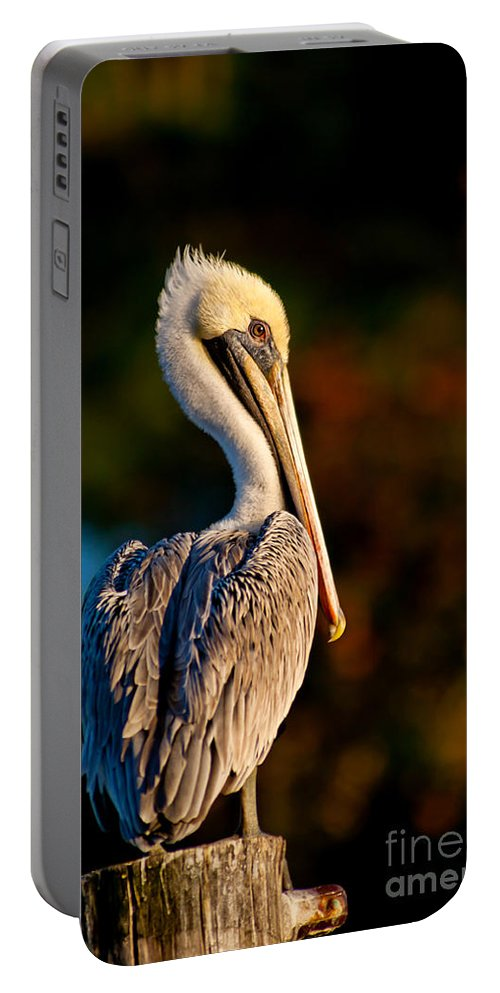 Brown Pelican Portable Battery Charger featuring the photograph Autumn Brown Pelican by Joan McCool