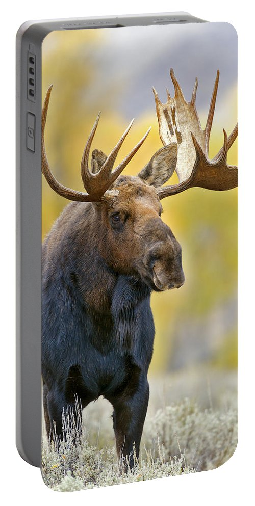 Autumn Portable Battery Charger featuring the photograph Autumn Bull Moose by Gary Langley