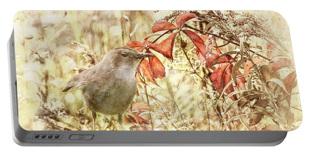 Catbird Portable Battery Charger featuring the photograph Autumn Catbird by Susan Capuano