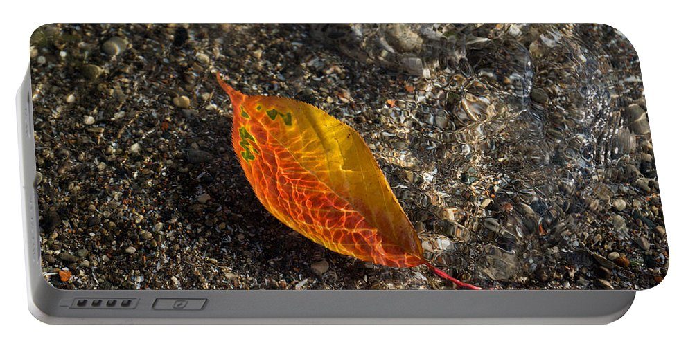 Georgia Mizuleva Portable Battery Charger featuring the photograph Autumn Colors And Playful Sunlight Patterns - Cherry Leaf by Georgia Mizuleva