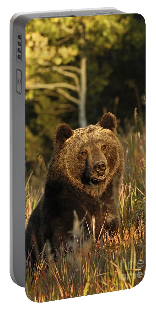 Grizzly Bear Portable Battery Charger featuring the photograph Autumn Days by Wildlife Fine Art