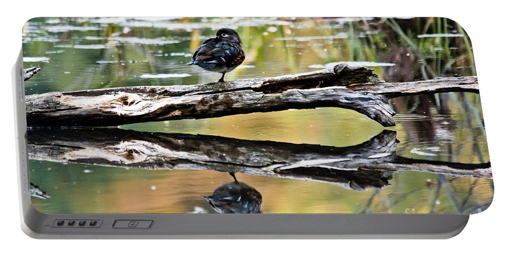 Portable Battery Charger featuring the photograph Autumn Duck Reflections by Cheryl Baxter