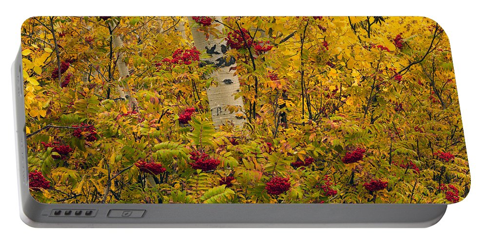 Aspen Forest Portable Battery Charger featuring the photograph Autumn Forest Colors by Leland D Howard