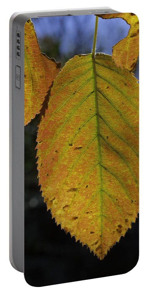 Orange Portable Battery Charger featuring the photograph Autumn Leaf by David Freuthal