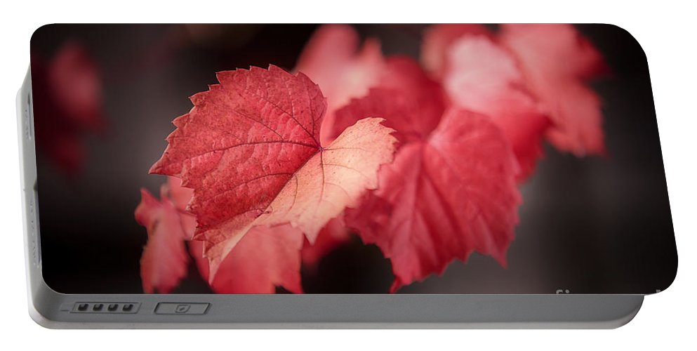 Autumn Portable Battery Charger featuring the photograph Autumn Leaves II by Ray Warren