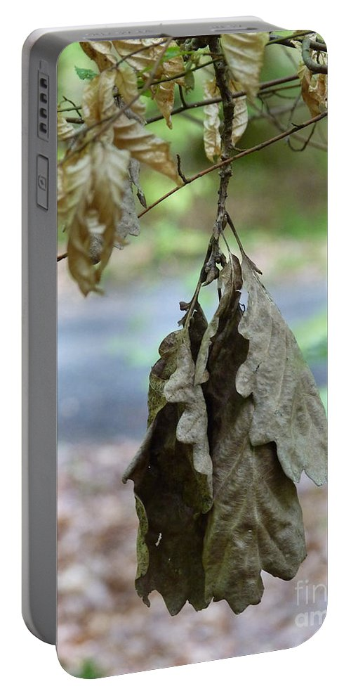 Autumn Portable Battery Charger featuring the photograph Autumn Leaves In Summer by Eva-Maria Di Bella