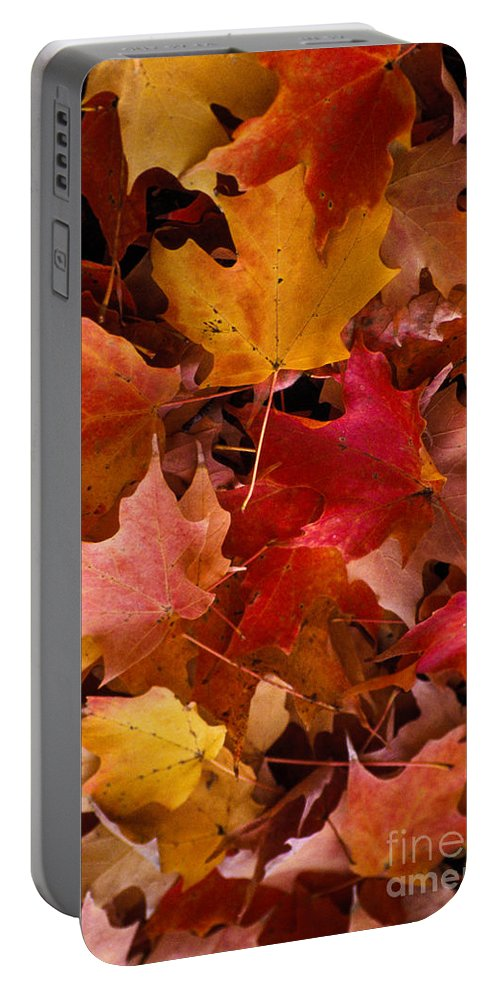 Robert Treman State Park New York Maple Leaves Colored Leaf Autumn Fall Portable Battery Charger featuring the photograph Autumn Maples by Bob Phillips